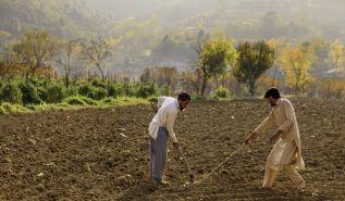 إهمال الزراعة والصناعة الباكستانية   النظام الرأسمالي الديمقراطي لا يرعى الإنتاج المحلي والتصنيع في باكستان